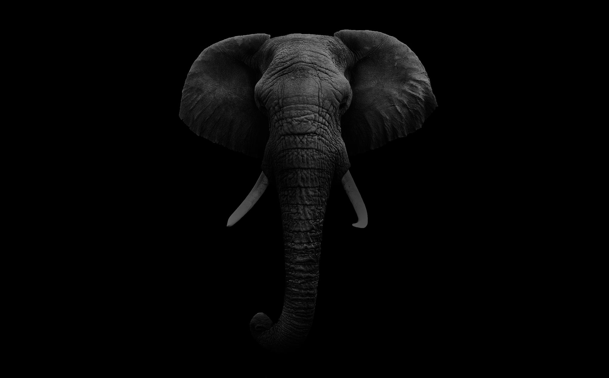 bg_elephant